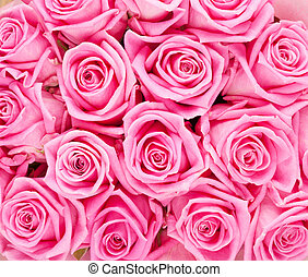 valentines nap, háttér, noha, rózsaszín rózsa