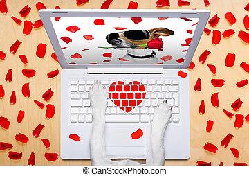 valentines nap, kutya, eredő, online, képben látható, egy, csevegés