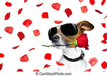 valentines nap, kutya, rózsa, alatt, száj