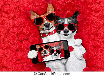 valentines, pareja, de, perros, enamorado