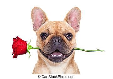 valentines, perro