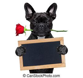 valentines, rose, hund