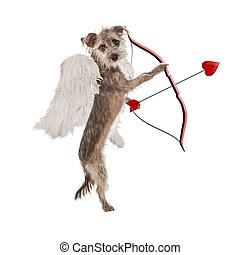 valentinkort dag, cupid, hund