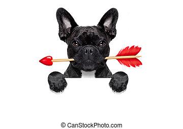 valentinkort, hund, i kärlek