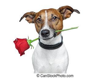 valentinkort, hund