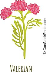 Valerian plant icon. Cartoon of valerian plant vector icon for web design isolated on white background