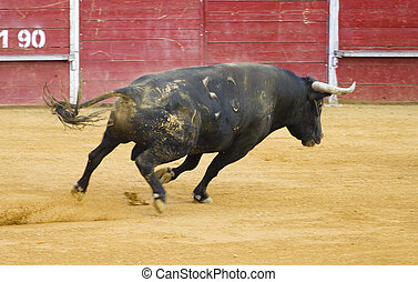 valiente, español, toro, en, un, bullfight