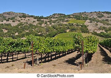 vallée, californie, napa, établissement vinicole