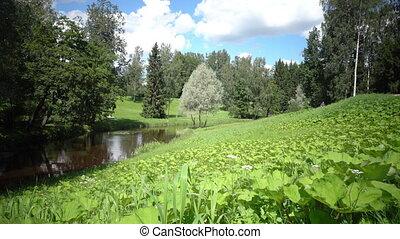 vallée, premier plan, rivière, été, mouvements, ensoleillé, appareil photo, croissant, herbe, jour, banque