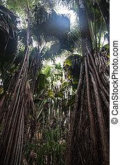 Valle de Mai Unesco Praslin in Seychelles