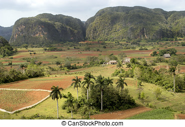 valle de vinales at Cuba - View at the valle de vinales at...