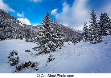 valle montagna, neve, percorso