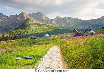 valle, polonia, gasienicowa, tatra, montagne