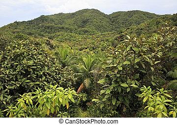 Vallee de Mai Nature Reserve in Praslin