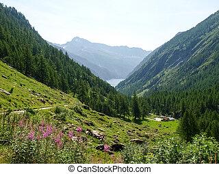 Lake of elder - Vallemaggia, Ticino, Switzerland: Lake of ...