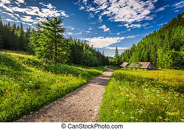 Valley in the Tatras mountains at sunset, Poland