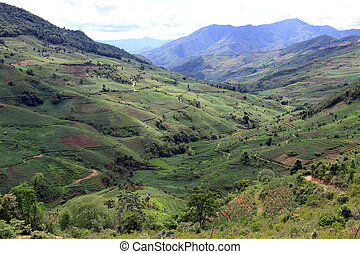 Valley in Yunnan - Valley with tea plantations in Yunnan,...
