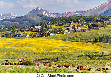 Valley covered with yellow wildflowers in Colorado.