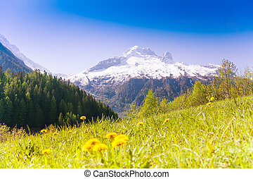 Valley with yellow dandelions near Mont Blanc