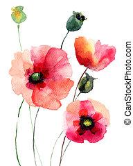 vallmo, blomningen