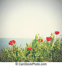 vallmo, blomningen, in, den, sky., årgång, retro designa