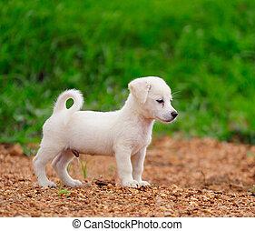 valp, hund, in, grön äng, gräs