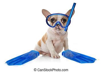 valp, hund, med, simning, snorkeling utrustar