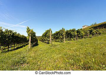 valpolicella, vignobles, italien, -, vin