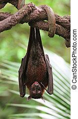 Vampire Bat Scary Staring Right at You