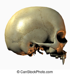 Vampire Skull Side View closeup with fangs. Isolated cutout...
