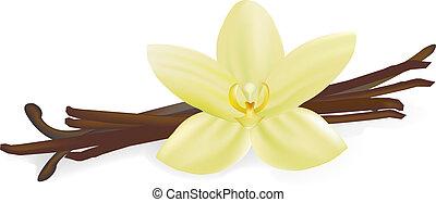 vanília, virág, hüvelyek