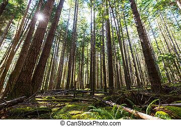 vancouver, bosque