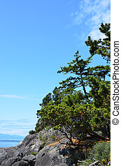 Vancouver Island East Sooke Park tree sky view - Trees,...