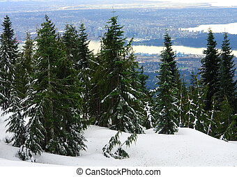 Vancouver View - View of Vancouver from Grouse Mountain