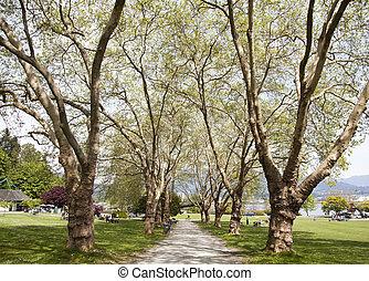 Vancouver's Park Alley