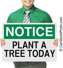vandaag, boompje, plant