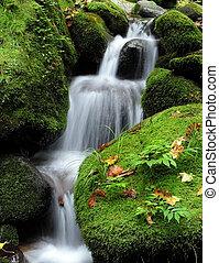 vandfald, ind, den, skov