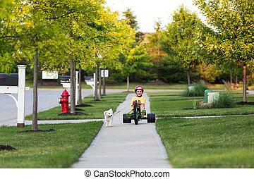 vandrande, grannskap, hund, trehjuling