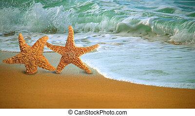 vandrande, stjärna, förtjusande, fish, längs, strand