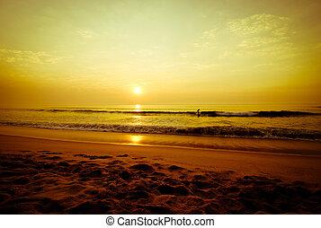 vandrande, strand, surfarear