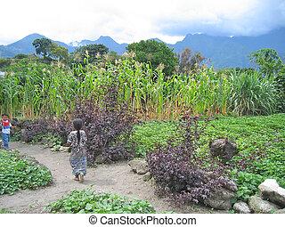vandrande, två, insjö, guatemala, sädesslag, atitlan, kulturer, barn