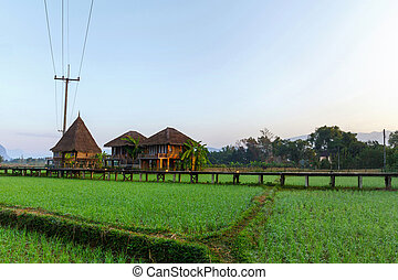 Green rice fields and mountains, Vang Vieng Resort, Laos