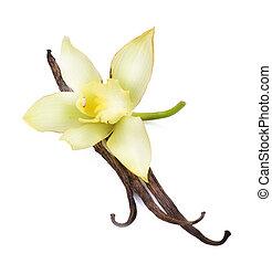 vaniglia, fiore, baccelli