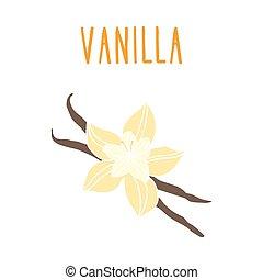 vanilka, beans.