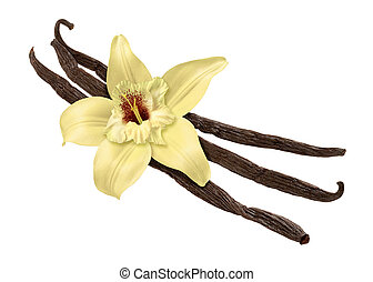 Vanilla Bean and Flower (clipping path) - Vanilla Bean and...