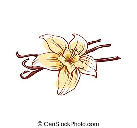 Vanilla flower and sticks isolated vector icon