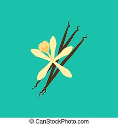 Vanilla flower illustration