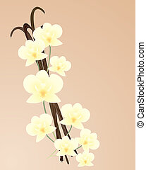vanilla orchid - an illustration of beautiful cream color...