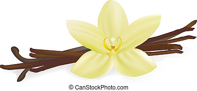 Vanilla Pods And Flower, Isolated On White Background, Vector Illustration