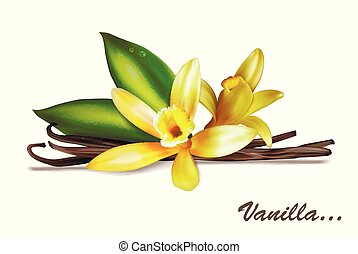 Vanilla spice with flower and leaves. Vector illustration isolated on white background.